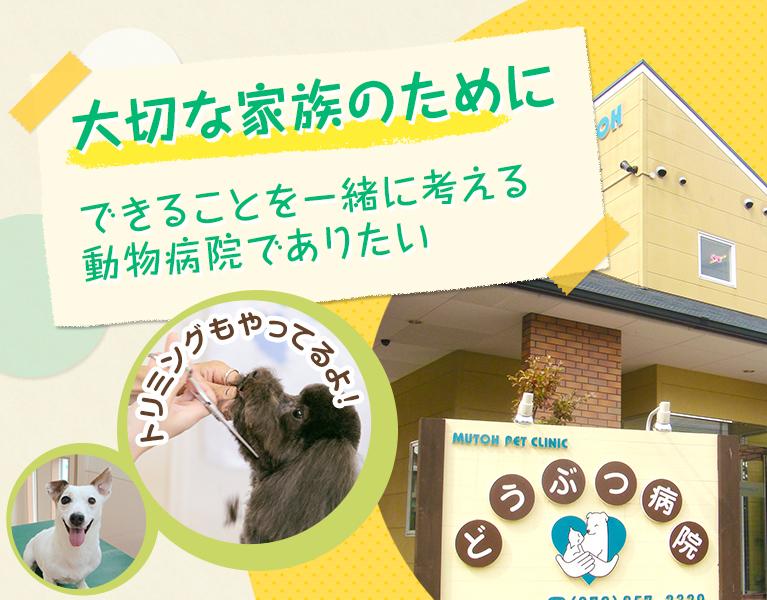 大切な家族のために できることを一緒に考える動物病院でありたい トリミングもやってるよ!