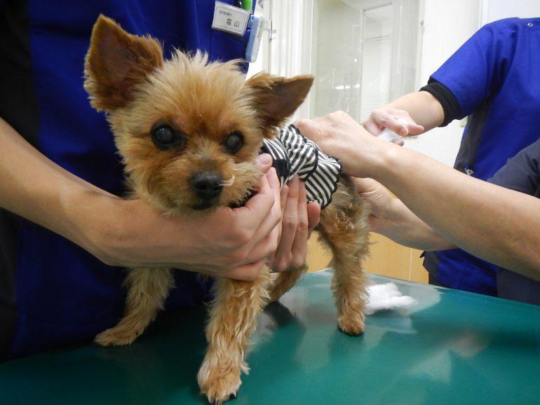 犬 オゾン療法 注腸法 枚方市